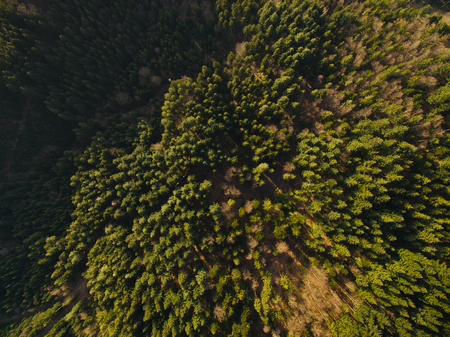 Aerial view of beautiful green woods with trees, Germany