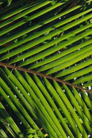 close-up view of beautiful green palm leaves at Thoddoo island, Maldives