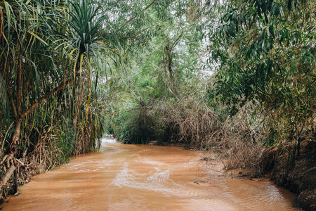 River in Rainforest at Fairy Stream Canyon. Mui Ne. Vietnam