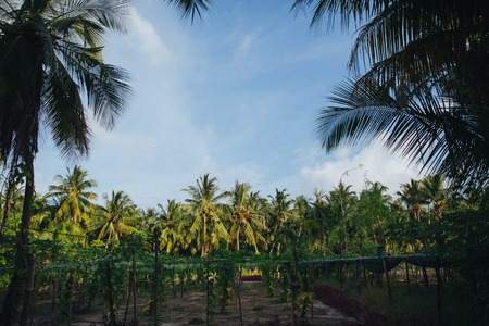 beautiful landscape with green palm trees at Thoddoo island, Maldives