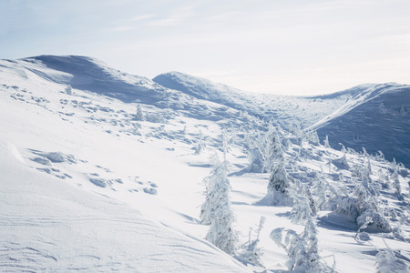 White winter forest on hills of Gorgany mountains Imagens