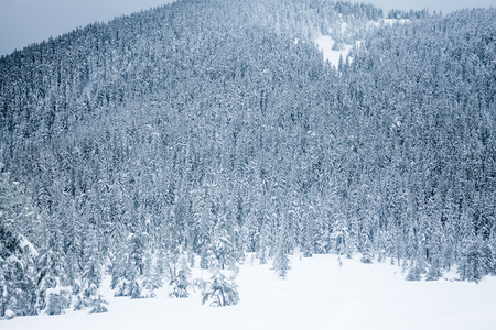 Landscape of winter forest in Gorgany mountains 스톡 콘텐츠