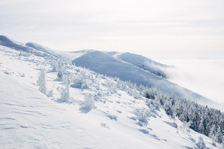 Frozen forest on hills of Gorgany mountains 스톡 콘텐츠