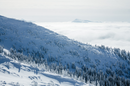 Landscape of winter forest in Gorgany mountains Imagens
