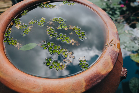 close-up view of green leaves in water in pot and pond in Hue, Vietnam