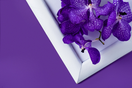 top view of orchid flowers on white frame on purple surface