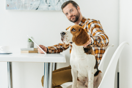 businessman with tablet palming dog in office Stock Photo