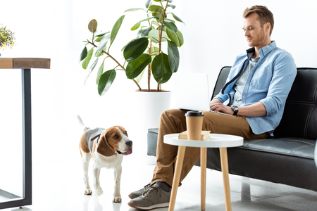 male freelancer working on laptop while beagle running near table with paper coffee cup at home office