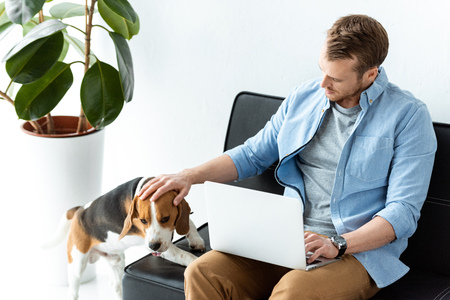 high angle view of male freelancer with laptop touching beagle on sofa at home office