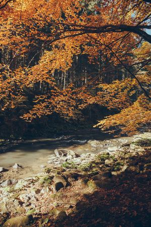 streaming mountain river in autumnal forest, Carpathians, Ukraine