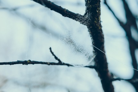 Close-up shot of spider web on tree branch in front of blue sky