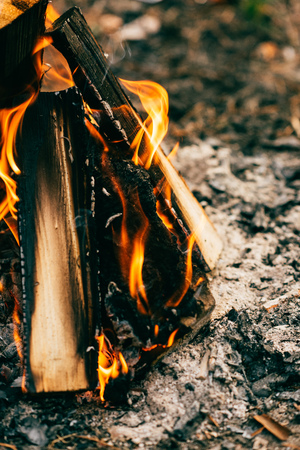 Close up of burning timber bonfire in forest