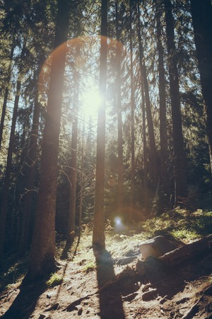 Scenic view of beautiful green forest with sunlight flare in Carpathians, Ukraine