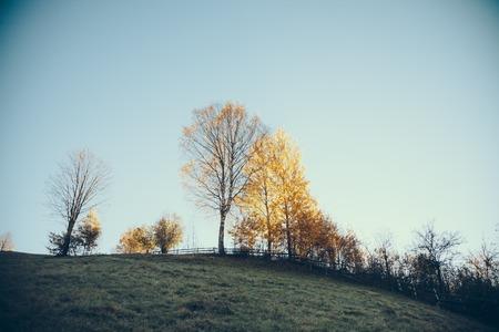 beautiful mountain pasture in Vorokhta under blue sky, Carpathians, Ukraine