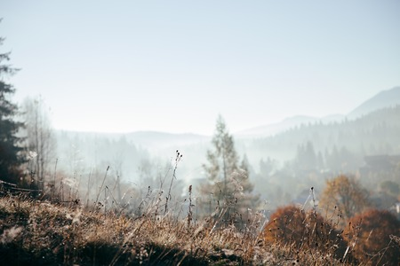 Close-up shot of plants on hill with foggy mountains on background, Carpathians, Ukraine Stock Photo