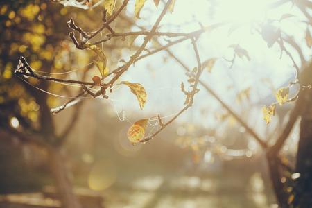 Primer plano de telaraña en la rama de un árbol con hojas doradas delante del sol brillante Foto de archivo