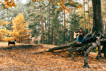 man playing acoustic guitar while sitting on tree in park with dogs