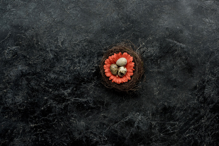 Organic quail eggs in nest with flower on dark background
