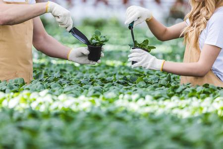 Close-up view of gardeners planting flowers in nursery 版權商用圖片