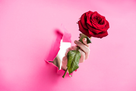 cropped image of woman holding red rose in hole in pink paper Stock Photo
