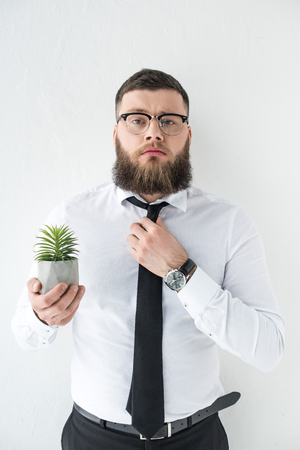 portrait of confident businessman with cactus plant in hand isolated on grey