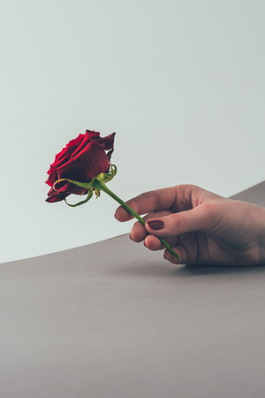 cropped image of woman holding red rose in hand Stock Photo