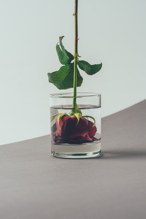 red rose bud in glass of water
