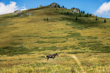 horse grazing on mountain meadow in Altai, Russia