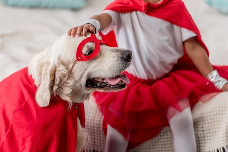 Partial view of hand petting happy golden retriever dog in superhero costume