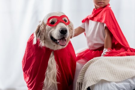 Partial view of little kid with golden retriever dog in red superhero costumes Stock Photo