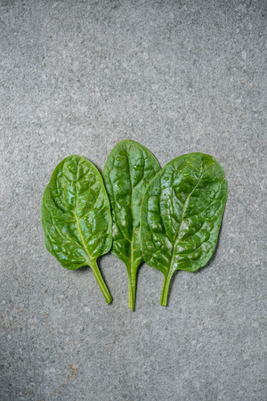 Row of wet and fresh spinach leaves on grey background