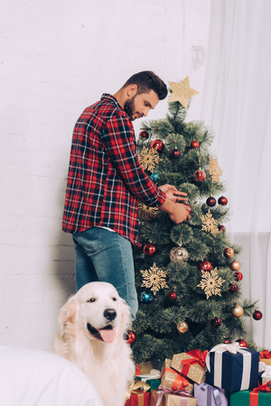 man decorating christmas tree while cute golden retriever sitting near at home