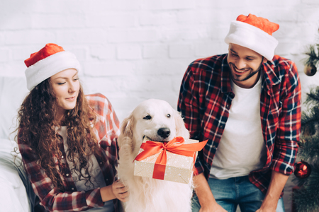 adorable golden retriever with gift box in mouth and couple in santa hats at on chritmas at home Stock Photo