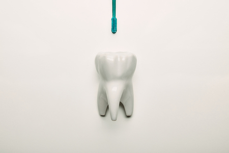 top view of tooth model and toothbrush on white backdrop Stock Photo