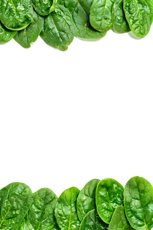 Frame of fresh spinach leaves with water drops isolated on white