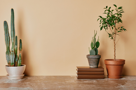 Different plants and books on beige background