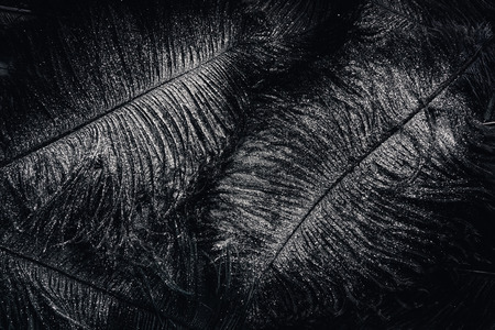 full frame image of surface with black feathers covered by silver