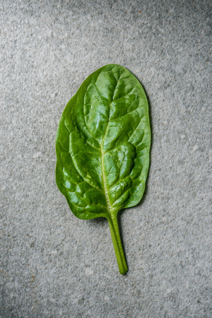 Top view of wet fresh spinach leaf on grey background