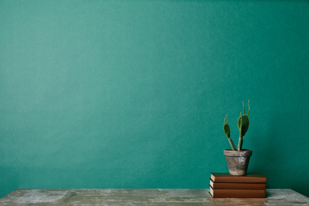Cactus plant on books on green background Reklamní fotografie