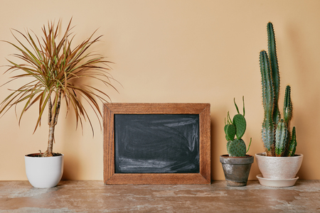 Empty photo frame and different plants on beige background Imagens