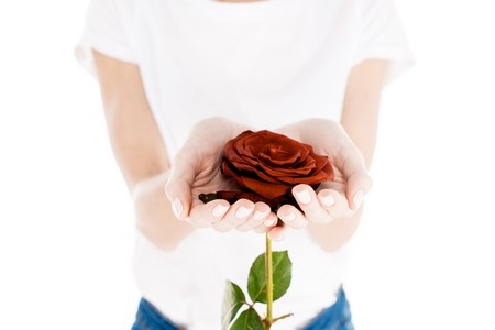 Partial view of woman holding wonderful red flower isolated on white Standard-Bild - 112379994
