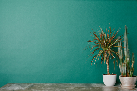 Two plants in pots on dusty table on green background Stock Photo
