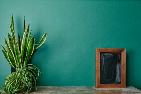 Plants in flowerpots and empty photo frame on dusty table  green background Stock Photo