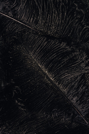 full frame view of decorative black feathers with golden dust, festive background