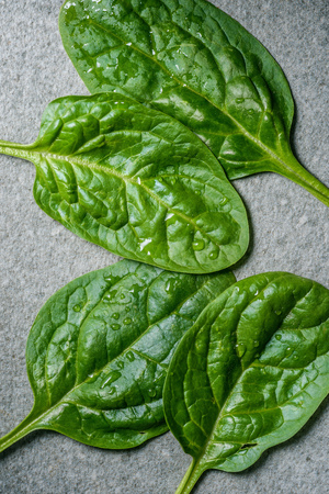 Top view of green and fresh picked spinach leaves on grey background 스톡 콘텐츠