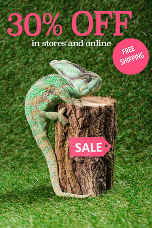 beautiful bright green chameleon climbing on stump with sale tag, with 30 percents off, free shipping lettering Stock fotó