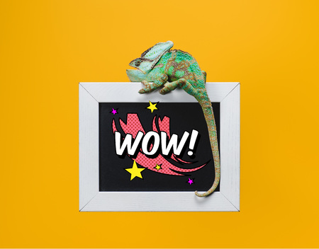 beautiful green chameleon on blackboard with wow symbol isolated on yellow Stock fotó
