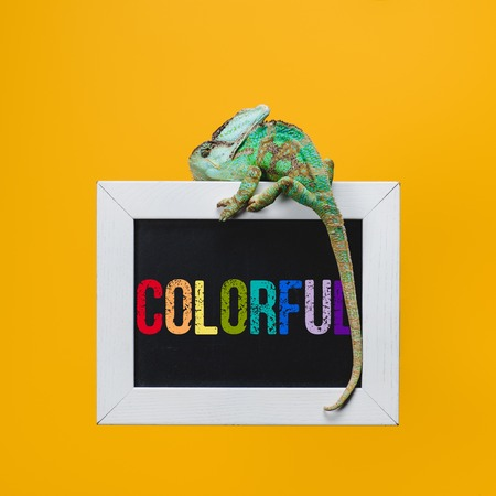 beautiful bright exotic chameleon on blackboard with colorful sign isolated on yellow Stock fotó