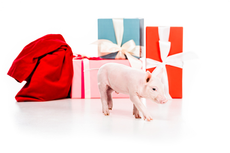 close-up shot of piggy and christmas gifts isolated on white