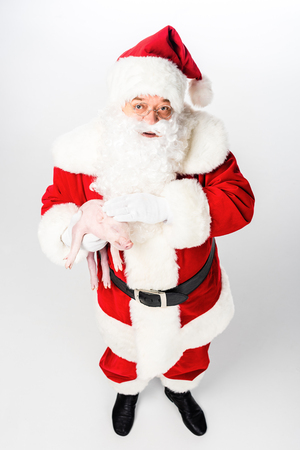 high angle view of santa claus holding cute little pig and looking at camera isolated on white Stock Photo